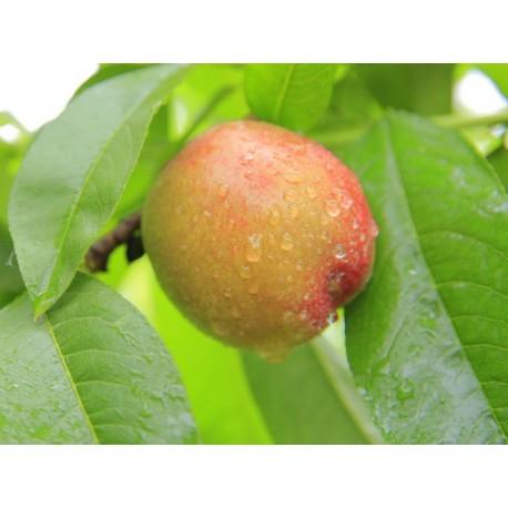 Prodej sadeb a ovoce zeleniny od prvovýrobců